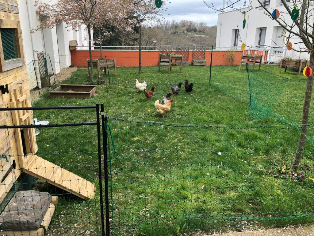 Les poules-4